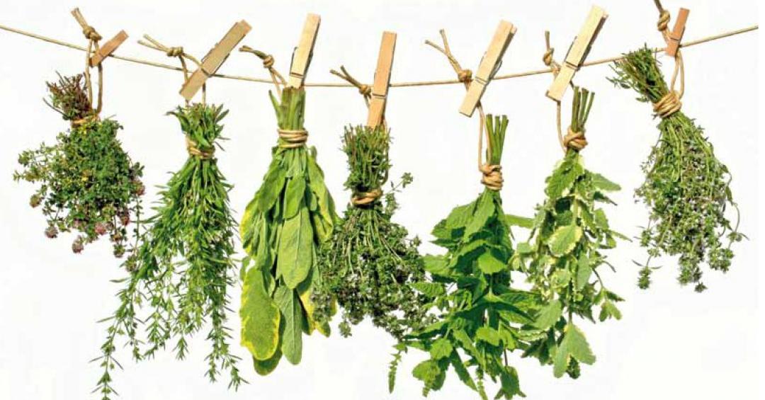 Plantas medicinales contra el insomnio