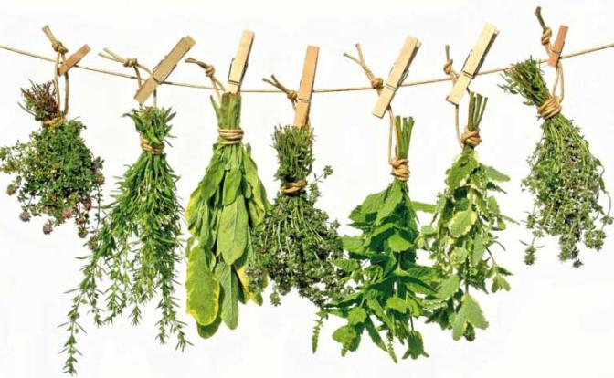 plantas medicinales para el insomino